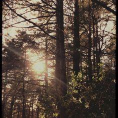 【bbkitc】さんのInstagramをピンしています。 《Needing to breath... #hike #hiking #hikingtrail #tree #trees #woods #wood #sunsine  #ハイキング #トレイル #トレイルウォーキング #木 #森 #太陽》