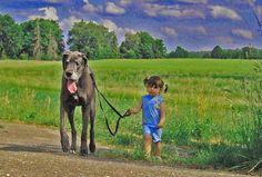 Deutsche Dogge - Поиск в Google