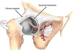 When certain soft-tissue pathologies are present, many joints have a characteristic pattern of limited movement. This is called Capsular Pattern Musculoskeletal System, Author, Pattern, Patterns, Writers, Model, Swatch