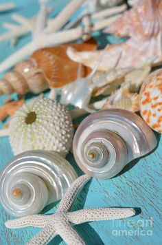 Turquoise Photograph - Shell Collection by Carol McGunagle