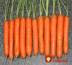 Carrots are now come in all shapes and sizes traditional long, tapered ones; short stubby ones; tiny fingerlike ones; even little round ones. Growing Carrots, Cooked Carrots, Fruit And Veg, Fruits And Vegetables, Summer House Garden, Sweet Carrot, Carrot Seeds, Farm Gardens, Plantation