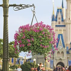 """Disney's Hanging Baskets 