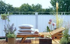 Balkon mit Gräsern, Kräutern und Kletterpflanze