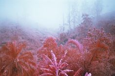 EN IMAGES. Richard Mosse: la guerre en rose - L'EXPRESS