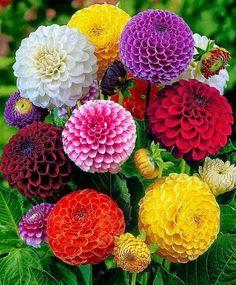 ❀ ✿༻ Passion for FLOWERS ❀ Dahlias
