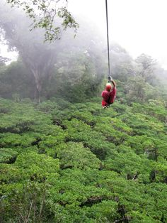 Zip lining!Plan on crossing this off my bucket list this summer.