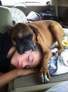 My boy and his dog. #dogs #boxers #roadtrip