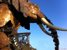 (L'éléphant de l'Ile) ☆