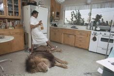The lion sleeps tonight: A maid steps over Neil VERY carefully in the family's kitchen whi...