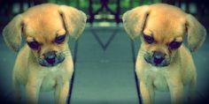 Facebook Twitter Google+ LinkedIn WhatsAppUn tempo, quando il tuo animale domestico moriva, non restava altro che seppellirlo e piangere tutte le lacrime che avevi, nella speranza di poter trovare presto un nuovo compagno di vita. Ma adesso le cose potrebbero cambiare: dalla Corea del Sud giunge un'alternativa molto allettante al semplice rassegnarsi della morte del