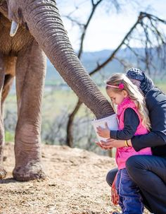 Buffelsdrift Activity - Elephant Feeding - Adult - Miles For Style Game Lodge, Rhinos, Gentle Giant, Elephants, Hug, Knowledge, Bucket, Touch, Activities