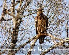 Eagle...local Autumn Twilight Photography in Buena Vista, CO