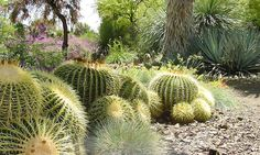 The Ruth Bancroft Garden - Estate of Walnut Creek: Adult Admission for One, Two or Four at The Ruth Bancroft Garden (50% Off)