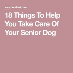 Your oldie (but goodie) pup brings so much joy to your life — it's time you return the favor. Panda Puppy, Dog Health Tips, Dog Nutrition, Dog Ages, Healthy Dog Treats, You Take, Take Care Of Yourself, Dogs, Beast