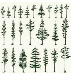 Set of stylized pine  evergreen tree silhouettes vector by 0mela on VectorStock®