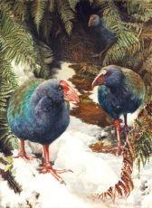 Wildlife and Bird Studies