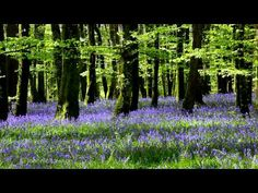 Relax with 1 hour of Soothing Nature Sounds from the Forest in Full HD-Birds Singing - YouTube