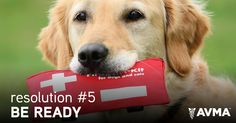 The New Year is just around the corner, bringing new opportunities. Make resolutions to benefit your pet, such as preparing for emergencies and disasters - and including your pet in those plans.