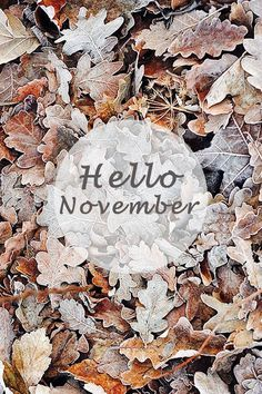 November, last part of autumn/fall Hallo November, Welcome November, Sweet November, November Month, Hello December, October Fall, Seasons Of The Year, Months In A Year, Four Seasons