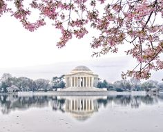 Washington DC - Cherry Blossoms. I've been primal edged to visit DC twice while the cherry trees were blooming.