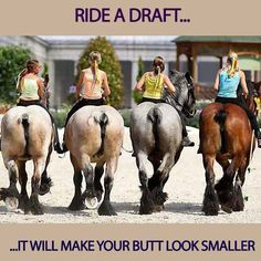 I ride a draft-cross and can definitely vouch for this!  They are so sweet.  :)