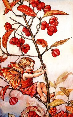 "Vintage print 'The Spindle Berry Fairy' by Cicely Mary Barker from ""The Book of the Flower Fairies""; Poem and Pictures by Cicely Mary Barker, Published by Blackie & Son Limited, London [Flower Fairies - Autumn] Cicely Mary Barker, Flower Fairies Books, Elfen Fantasy, Autumn Fairy, Fairy Pictures, Vintage Fairies, Vintage Flowers, Beautiful Fairies, Fantasy Illustration"