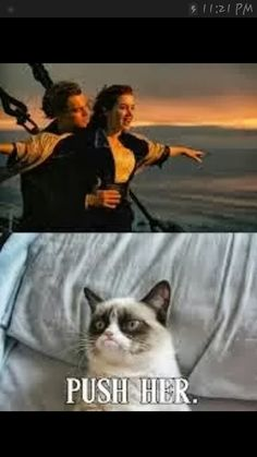 grumpy cat Somehow this made me laugh way harder than it should have. -- Grumpy Cat Watches Titanic by DoranBladefist on deviantA. Cute Animal Memes, Funny Animal Quotes, Animal Jokes, Funny Animal Pictures, Cute Funny Animals, Cute Cats, Funny Quotes, Hilarious Pictures, Adorable Kittens