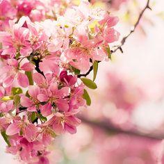 spring, spring, spring !