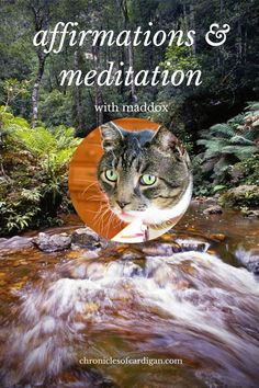 (New blog post!) The Chronicles of Cardigan: STOP the Madness! It's Time for Affirmations and Meditation With Maddox (My Thumbed Cat)