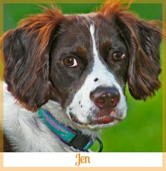 6224e6f2f16cac A story of dog adoption after a divorce and becoming a new family member.