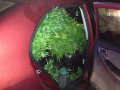 Toyota Corolla stuffed with weed caught by the RCMP