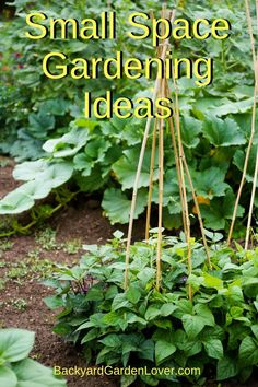 Looking for some small space gardening ideas? Here are tips for for growing vegetables, fruits and herbs even if all you have is an apartment balcony, a small patio, or a tiny backyard. Use the square foot method, plant in pots, and use food as landscaping. then enjoy fresh food from your own garden. #gardening #gardeningtips #organic #smallgarden #urbangardening #vegetables #herbs #verticalgarden