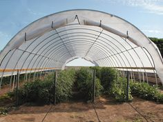Check out our new blog! Irrigation in a High Tunnel!