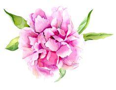 Pink Peony Flower Print of Original Watercolor painting.