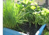 vegetables and aquaponics