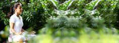 Meditação #Meditar - http://www.artofliving.org/br-pt