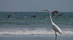 Variedad de aves marinas