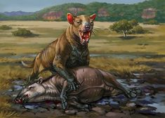 Second most badass Marsupial ever  - Thylacosmilus Atrox. Kaek on DeviantArt