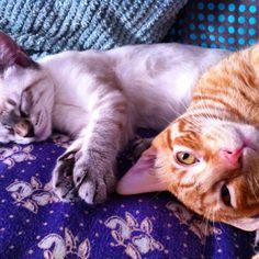 Eric&Peter