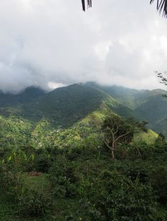 Jamaica's Blue Mountain     © Will Travel for Food  Wonderful coffee from Dennis!