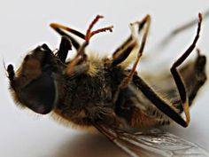 90 Percent of Corn Seeds Are Coated With Bayer's Bee-Decimating Pesticide - 90%!!!  We must stop these evil-doers or they will kill us all.