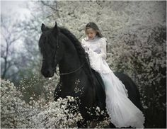 Friesian Horse with bride
