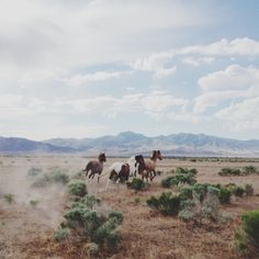 Horses in the wild | VSCO Cam | Kevin Russ