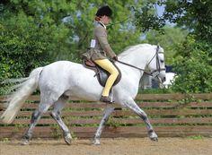 Connemara - photos - equestrian.ru