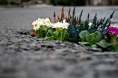 """Artist Pete Dungey plants gardens in the potholes on British roads. """"If we planted one of these in every hole,"""" he says, """"it would be a like forest in the road."""""""