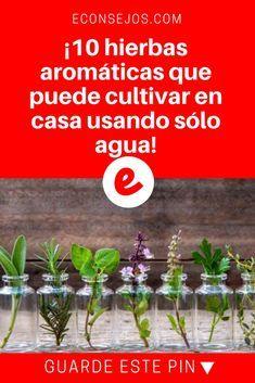 Cultivar hierbas aromaticas | ¡10 hierbas aromáticas que puede cultivar en casa usando sólo agua!