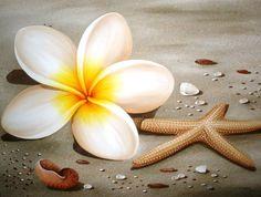 #452  Frangipani Starfish & Shell Painting