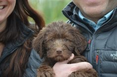 Crockett Doodles - Family Raised Doodle Puppies for Sale Goldendoodle Miniature, Australian Labradoodle Puppies, Labradoodle Puppies For Sale, Dogs And Puppies, Labrador Puppies, Dog Sleeping Positions, Sleeping Dogs, Labradoodle Pictures, Poodle Cross Breeds