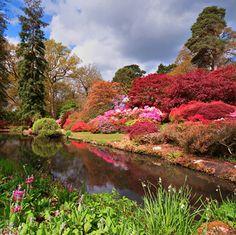 Images gardens pretentious idea 16 photos of flori, peisaje. Beauty Blender Video, Beauty Hacks Video, Hampshire England, Hidden Beauty, Family Days Out, Woodland Garden, New Forest, Exotic Plants, Botanical Gardens