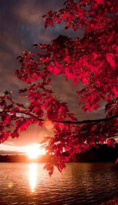 Autumnal sunset • photo: Helena Radulovic on 500px
